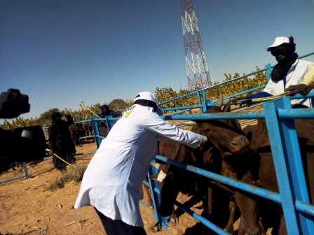 La campagne nationale de vaccination gratuite du cheptel dans la région d'Agadez