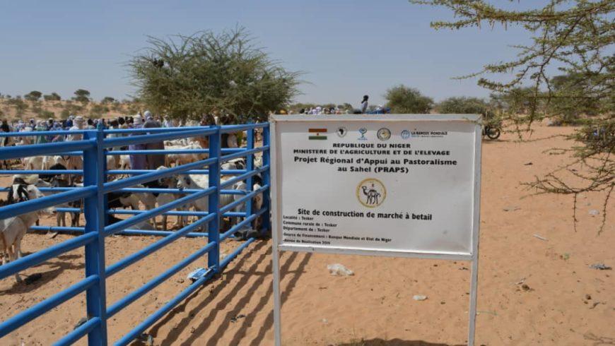 Marché à bétail PRAPS NIGER de Tesker , département de Tesker dans la région de Zinder en animation