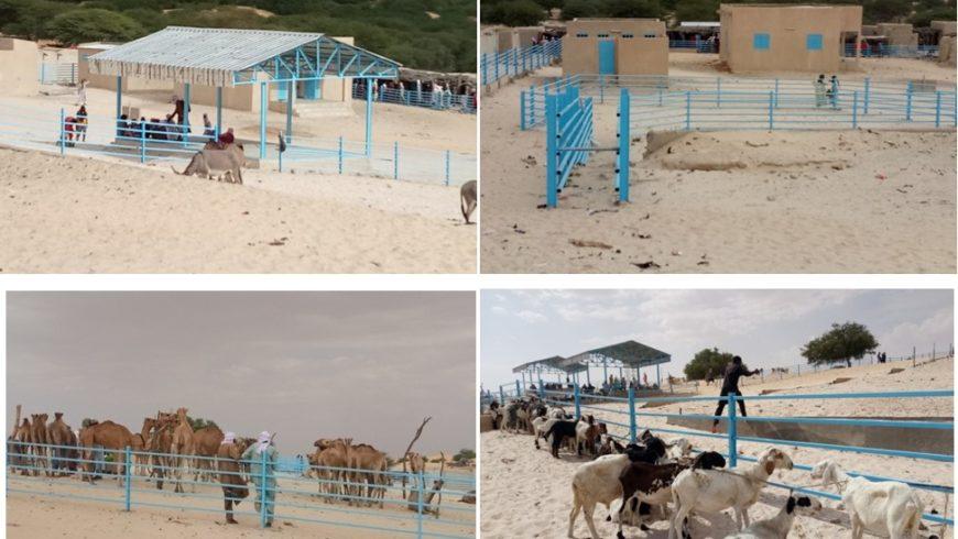 Marché à bétail PRAPS NIGER de Gouderam , département de Mainé soroa dans la région de Diffa en animation